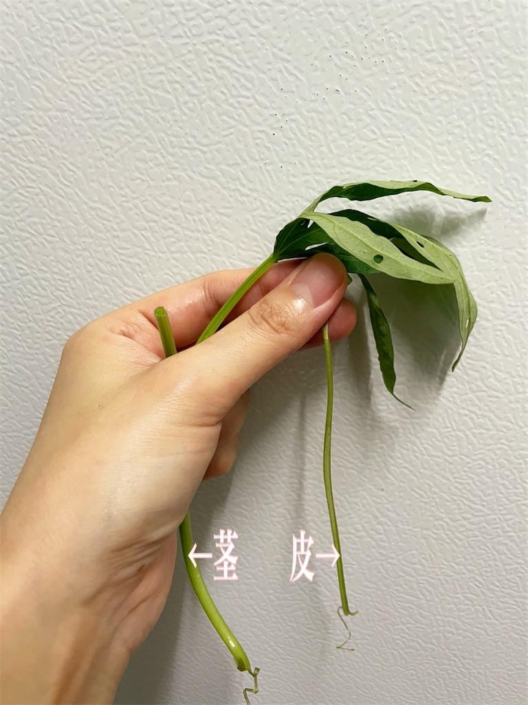 f:id:yasumarutaiwan:20210604141433j:plain