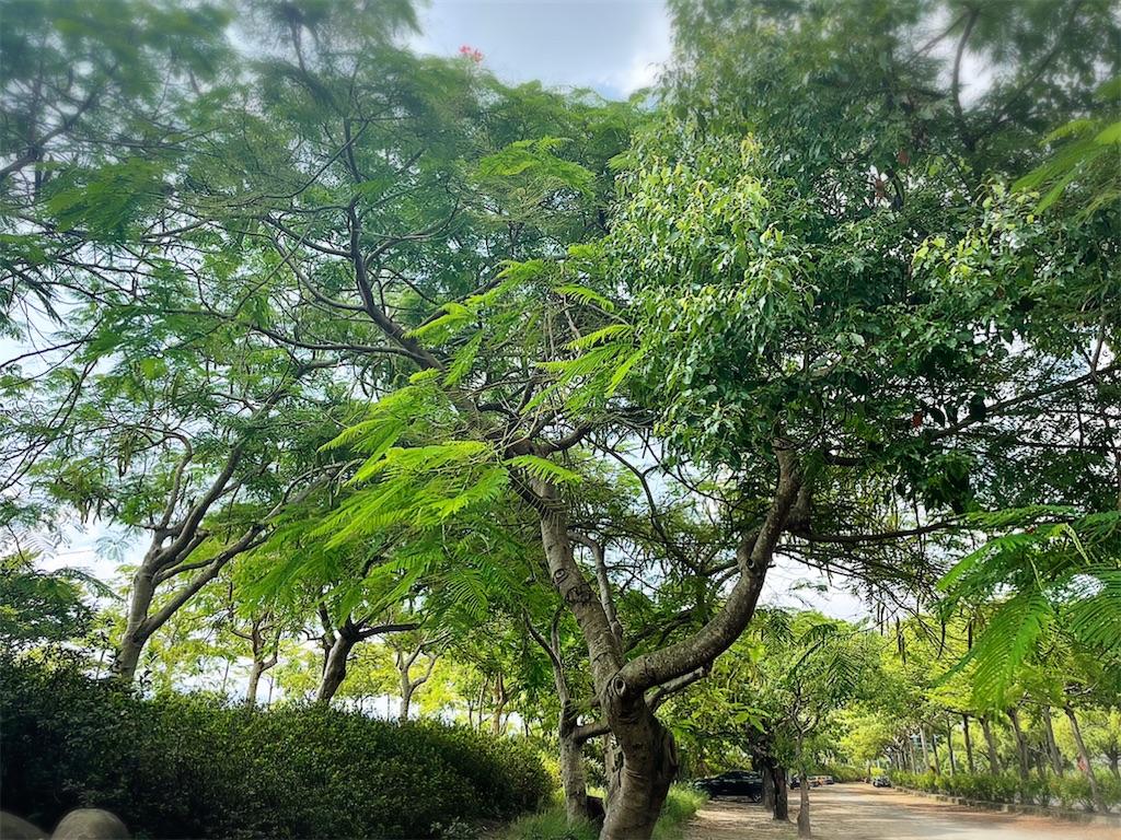 f:id:yasumarutaiwan:20210905162324j:plain