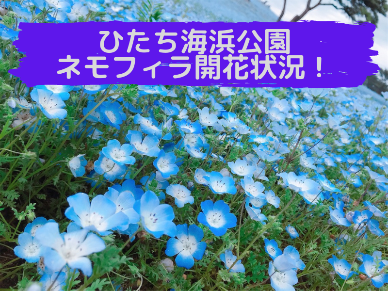 f:id:yasunari7373:20210503105054p:plain