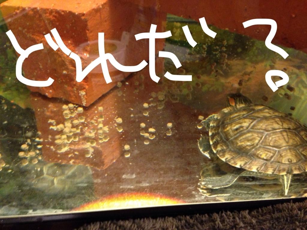 f:id:yasunori-suteki:20171102052012j:plain