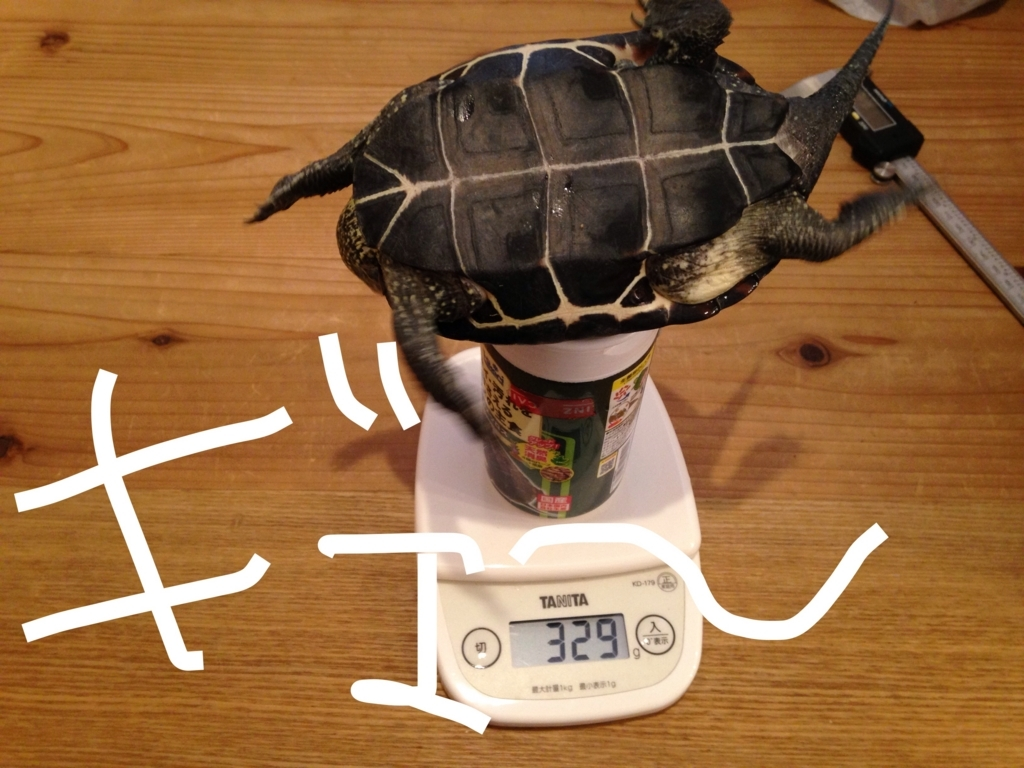 f:id:yasunori-suteki:20171113052241j:plain
