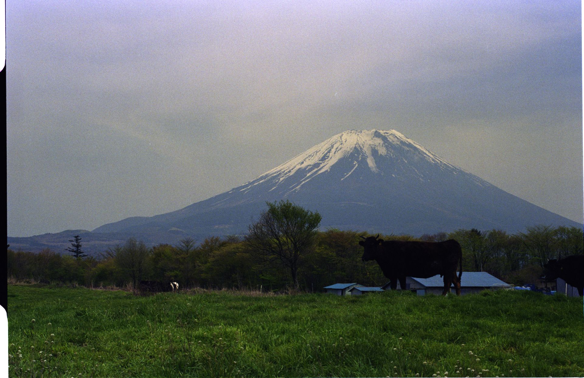f:id:yasuo_ssi:20201015230025j:plain
