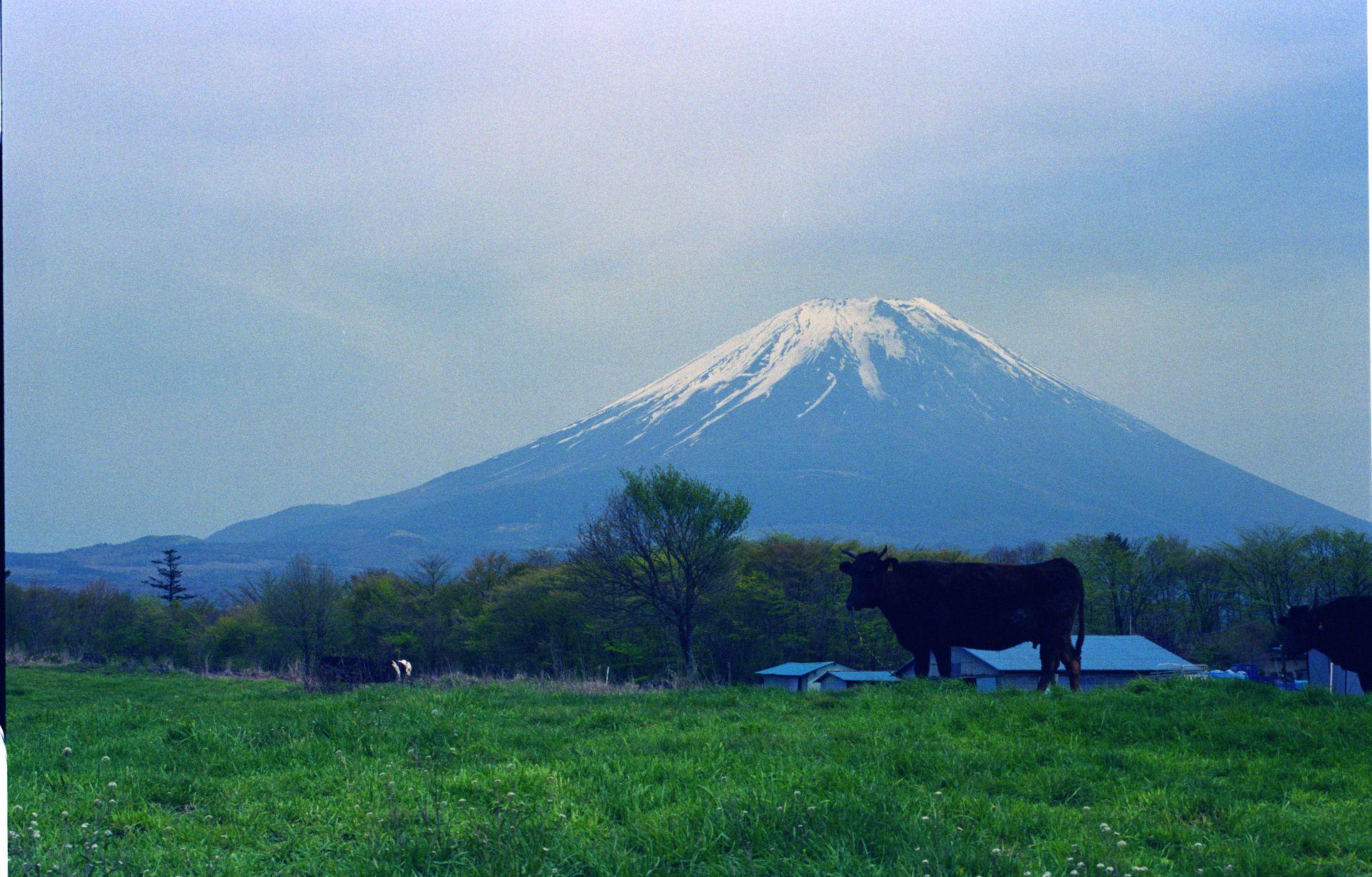 f:id:yasuo_ssi:20201015230850j:plain