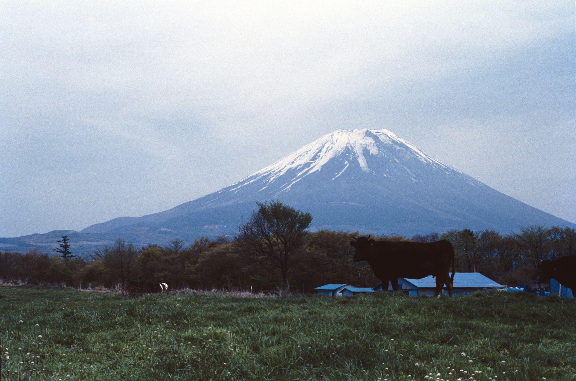 f:id:yasuo_ssi:20201015232717j:plain