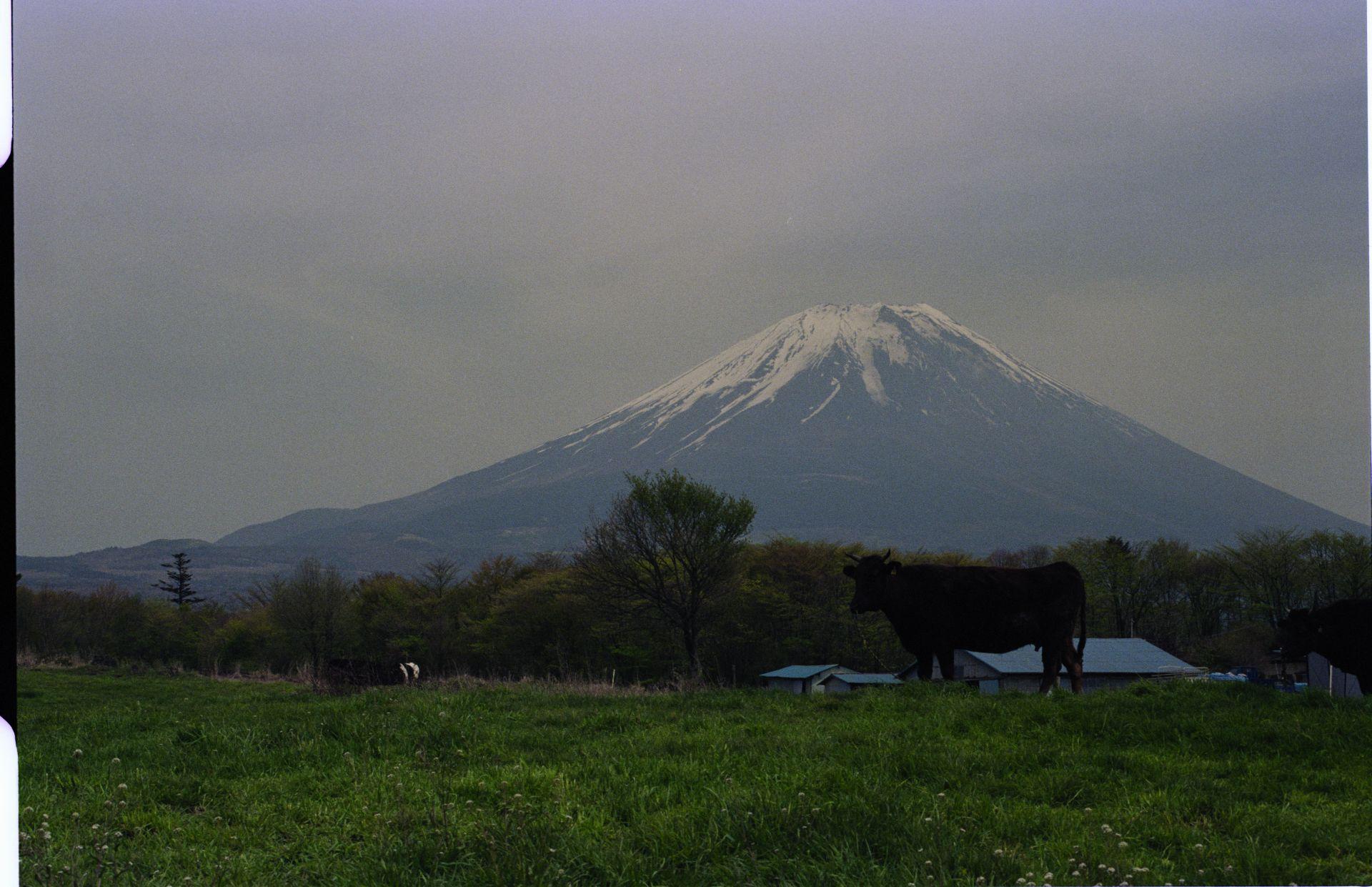 f:id:yasuo_ssi:20201015235243j:plain