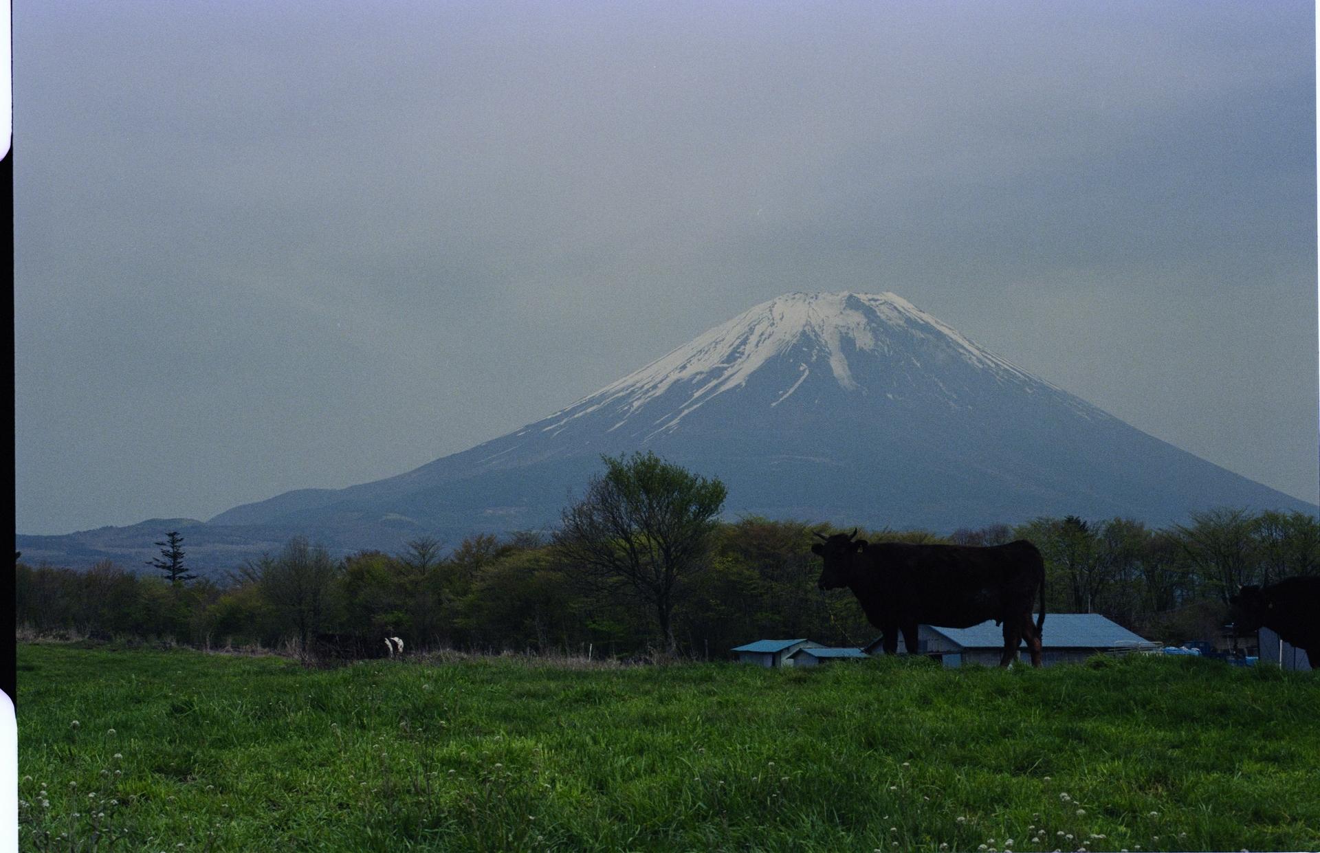 f:id:yasuo_ssi:20201015235423j:plain