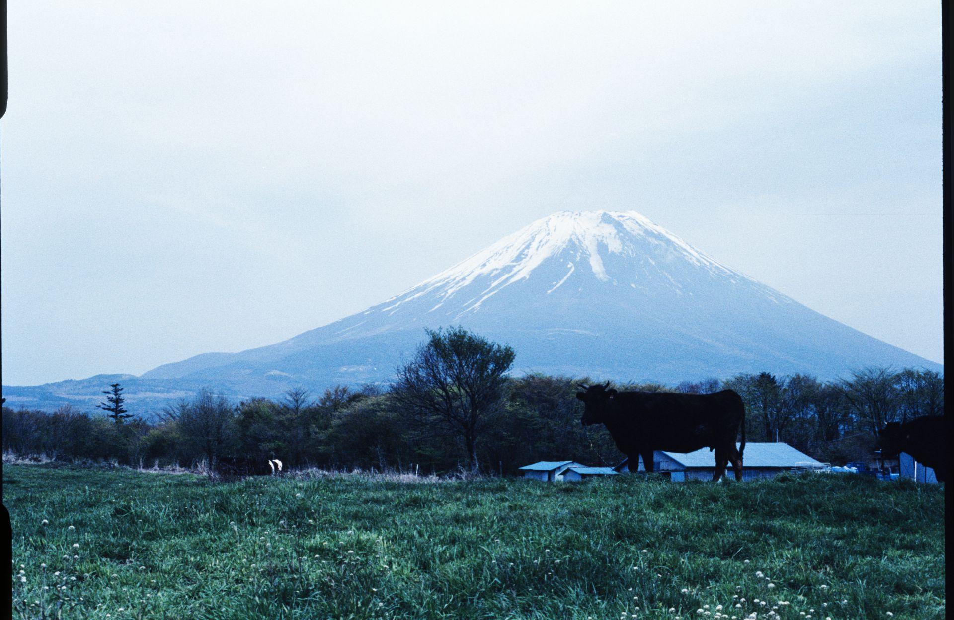 f:id:yasuo_ssi:20201016003417j:plain
