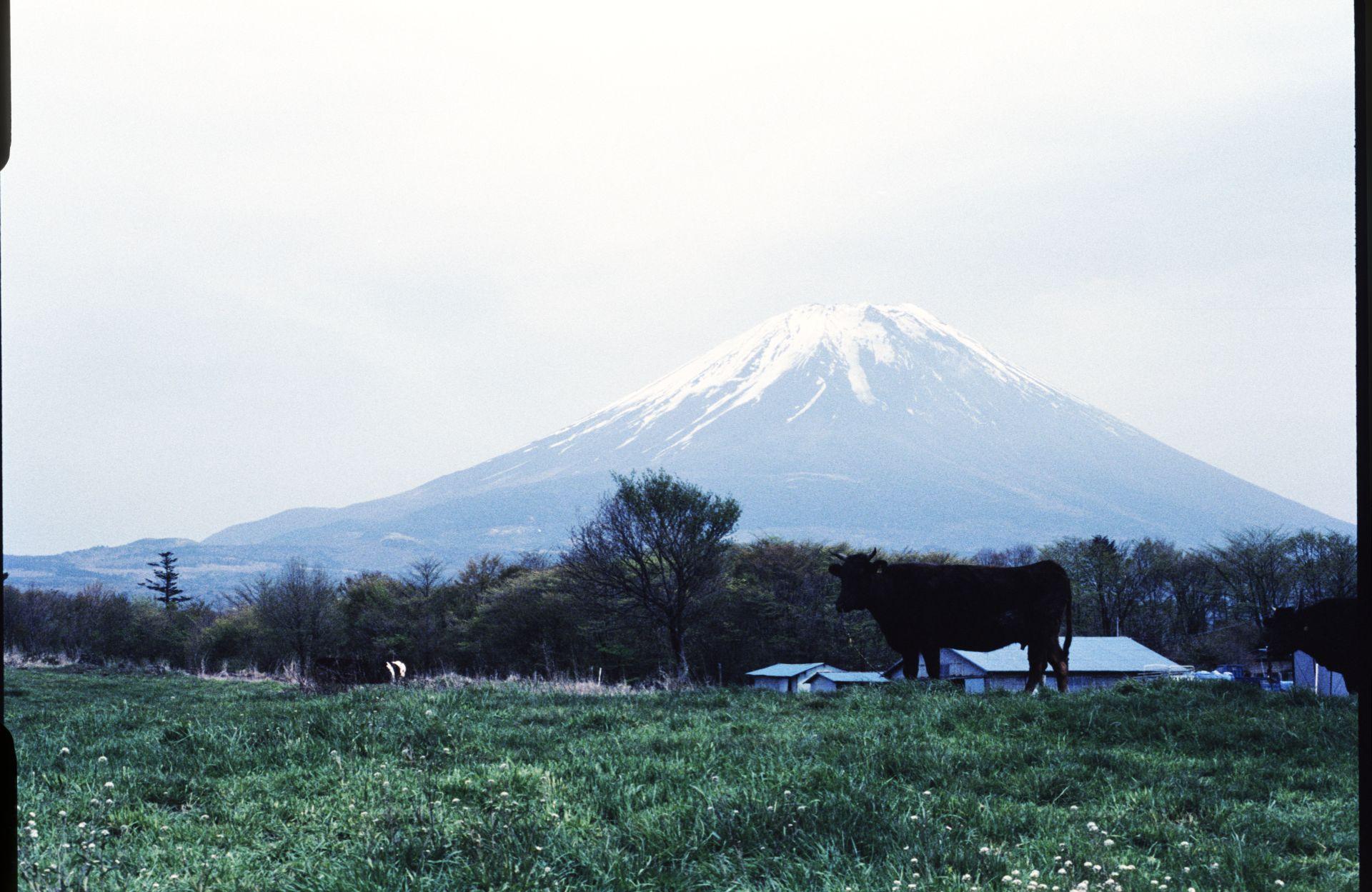 f:id:yasuo_ssi:20201016003441j:plain