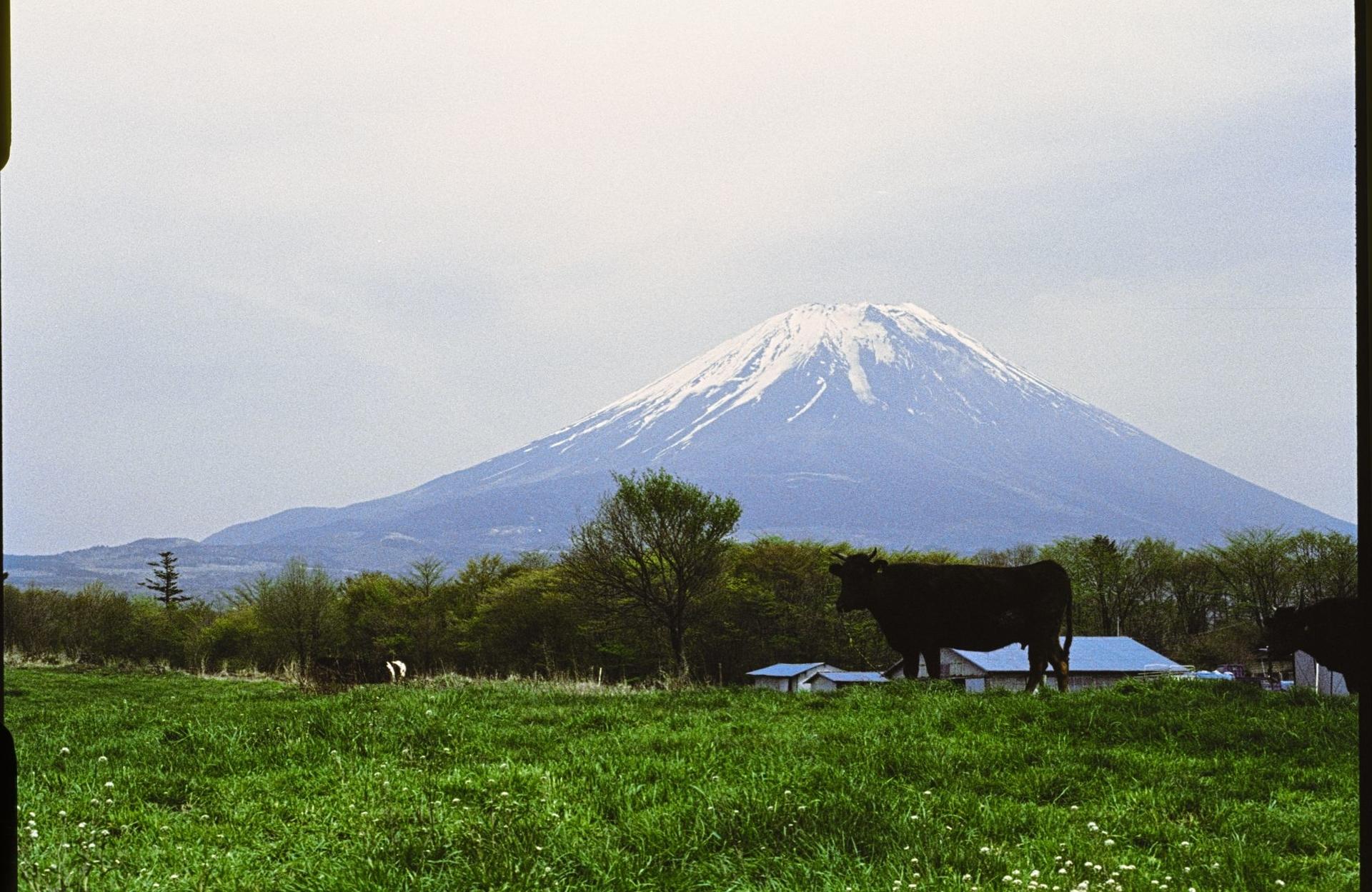 f:id:yasuo_ssi:20201017225820j:plain