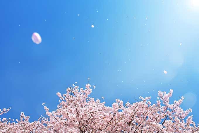 f:id:yasuragi-reien:20200114144231j:plain