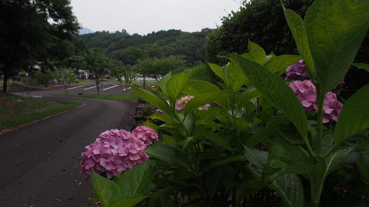 f:id:yasuragi-reien:20200617161606j:plain