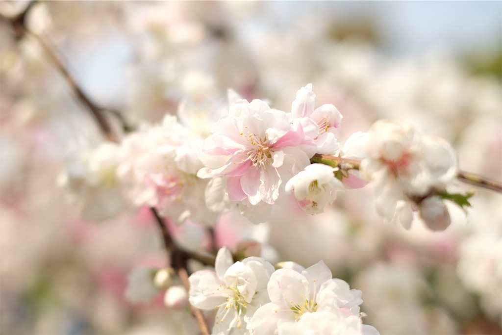 f:id:yasuragi_roaster:20190408131804j:image