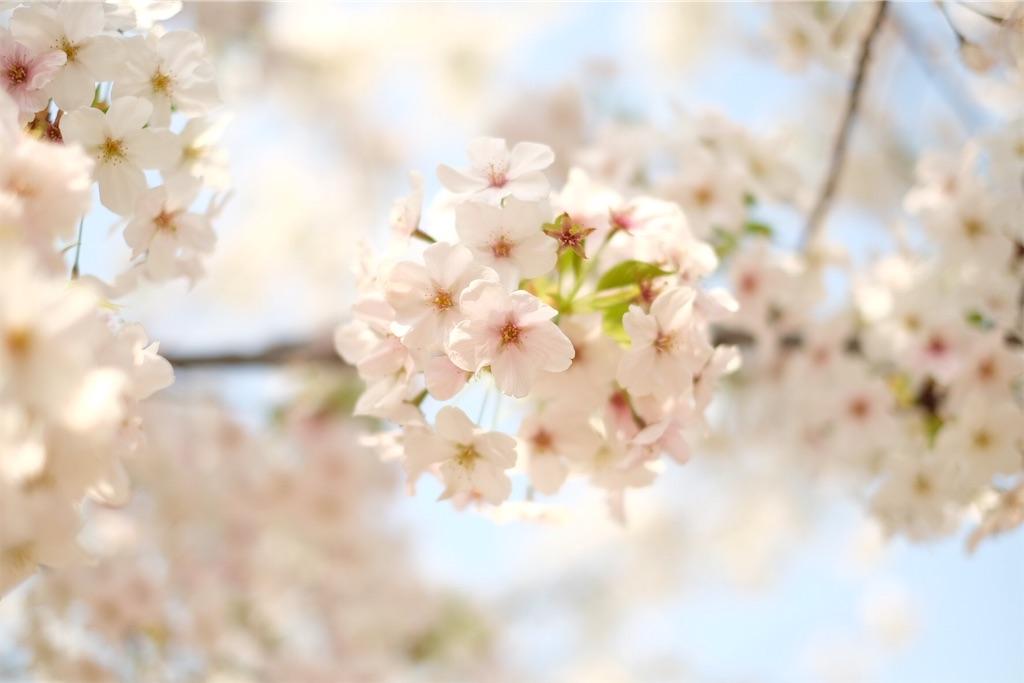 f:id:yasuragi_roaster:20190408131859j:image