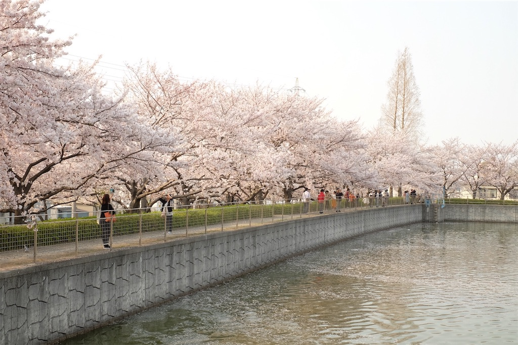f:id:yasuragi_roaster:20190408131952j:image