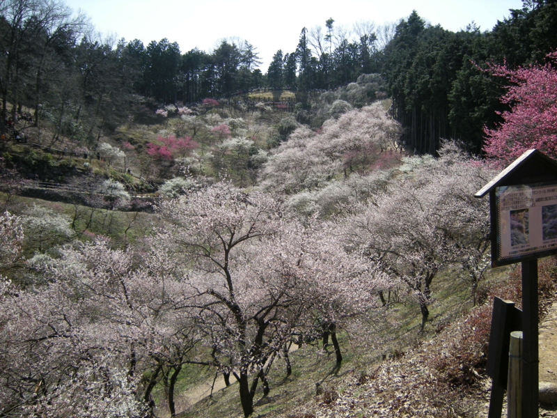 f:id:yasutaniwaki:20100314115639j:image