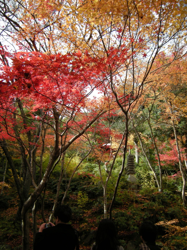 f:id:yasutaniwaki:20101123111819j:image