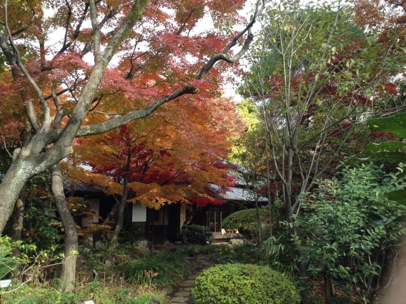 f:id:yasutaniwaki:20121201101839j:image