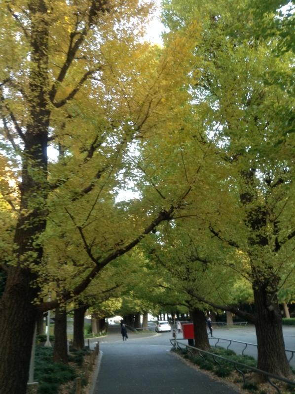 f:id:yasutaniwaki:20131116160700j:image