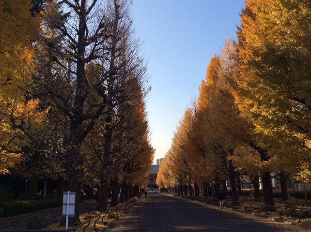 f:id:yasutaniwaki:20131209044332j:image