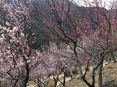 f:id:yasutaniwaki:20140224053741j:image
