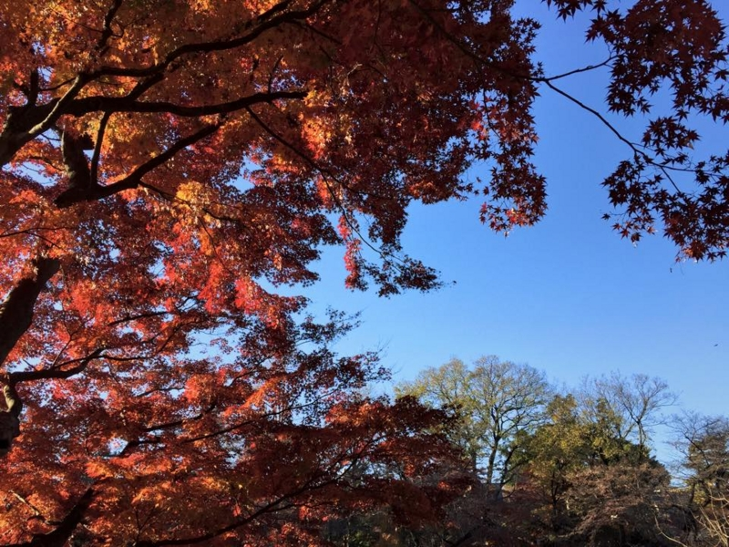 f:id:yasutaniwaki:20141208062711j:image