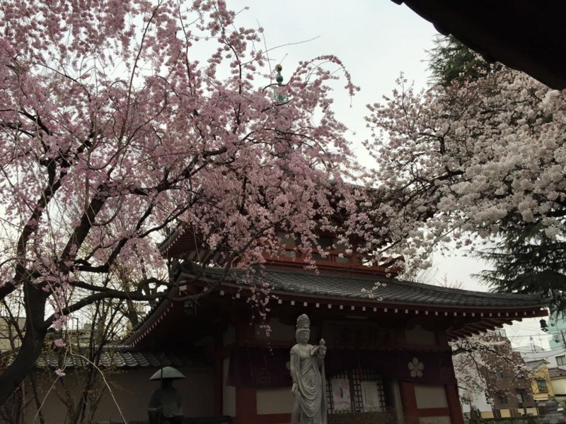 f:id:yasutaniwaki:20150329162124j:image