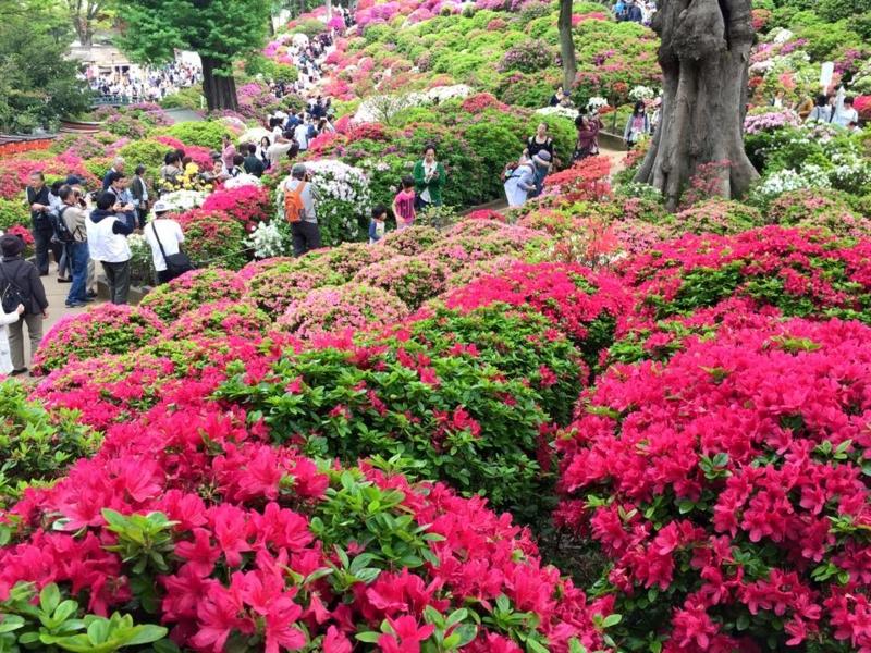 f:id:yasutaniwaki:20150427054131j:image