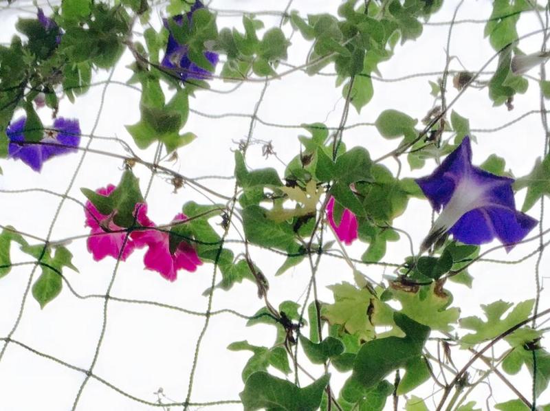 f:id:yasutaniwaki:20150831060938j:image
