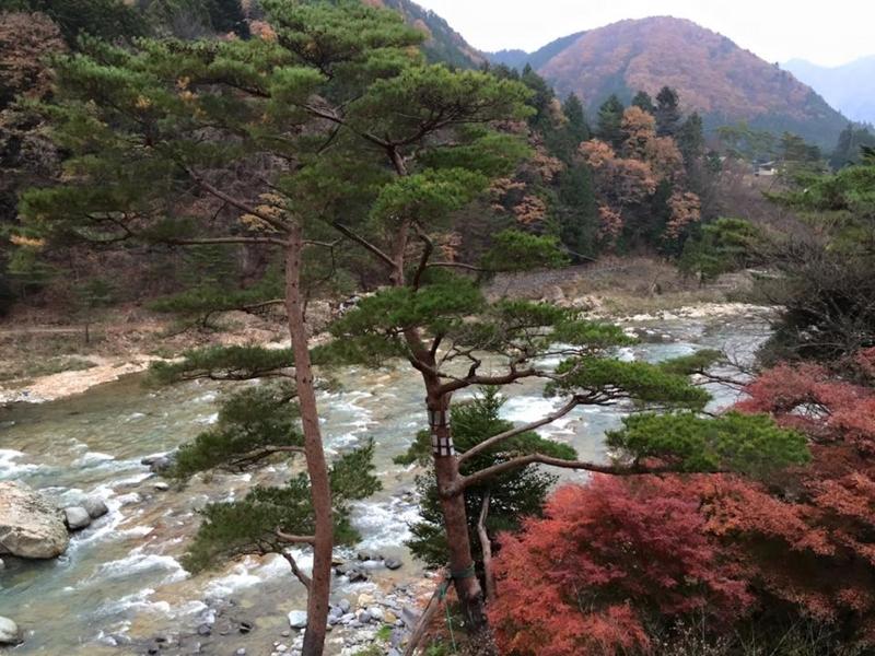 f:id:yasutaniwaki:20151124050029j:image