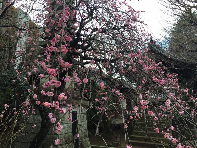 f:id:yasutaniwaki:20160221164959j:image