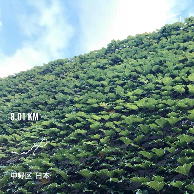 f:id:yasutaniwaki:20180806060601j:image