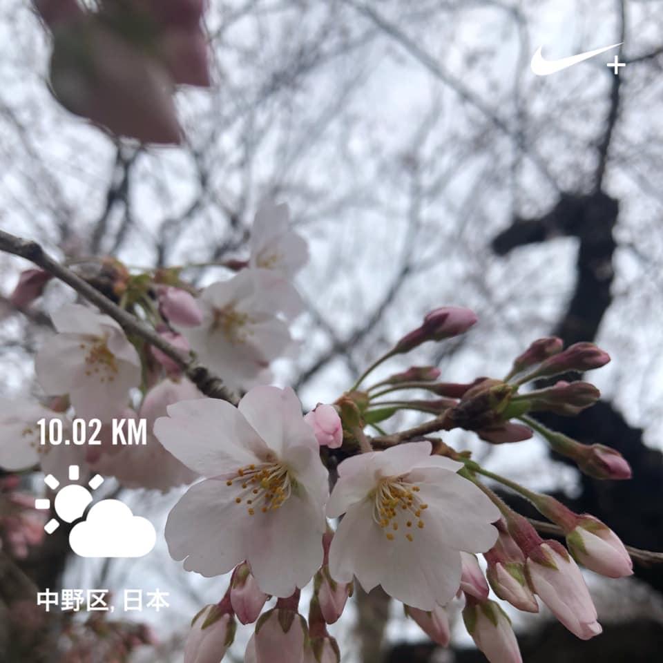 f:id:yasutaniwaki:20190324170231j:plain