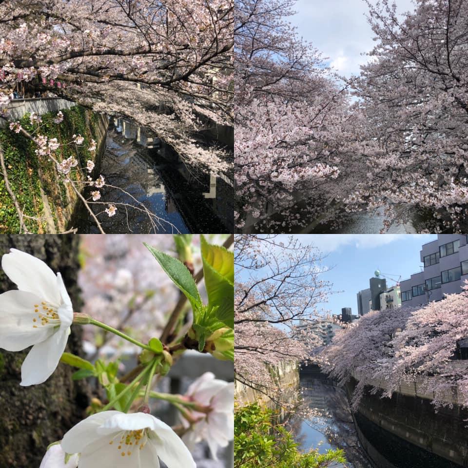 f:id:yasutaniwaki:20190331181018j:plain