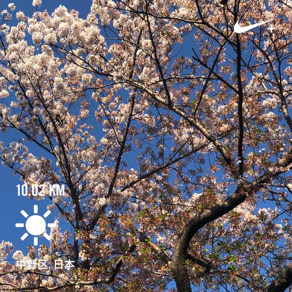 f:id:yasutaniwaki:20190413173559j:plain