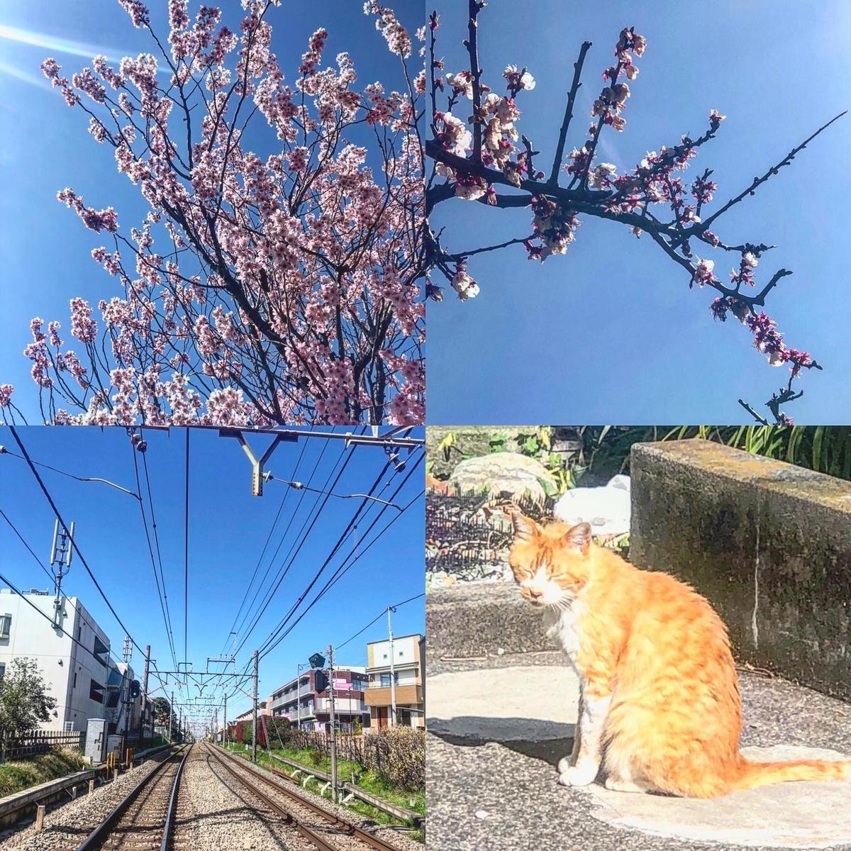 f:id:yasutaniwaki:20200315172919j:plain