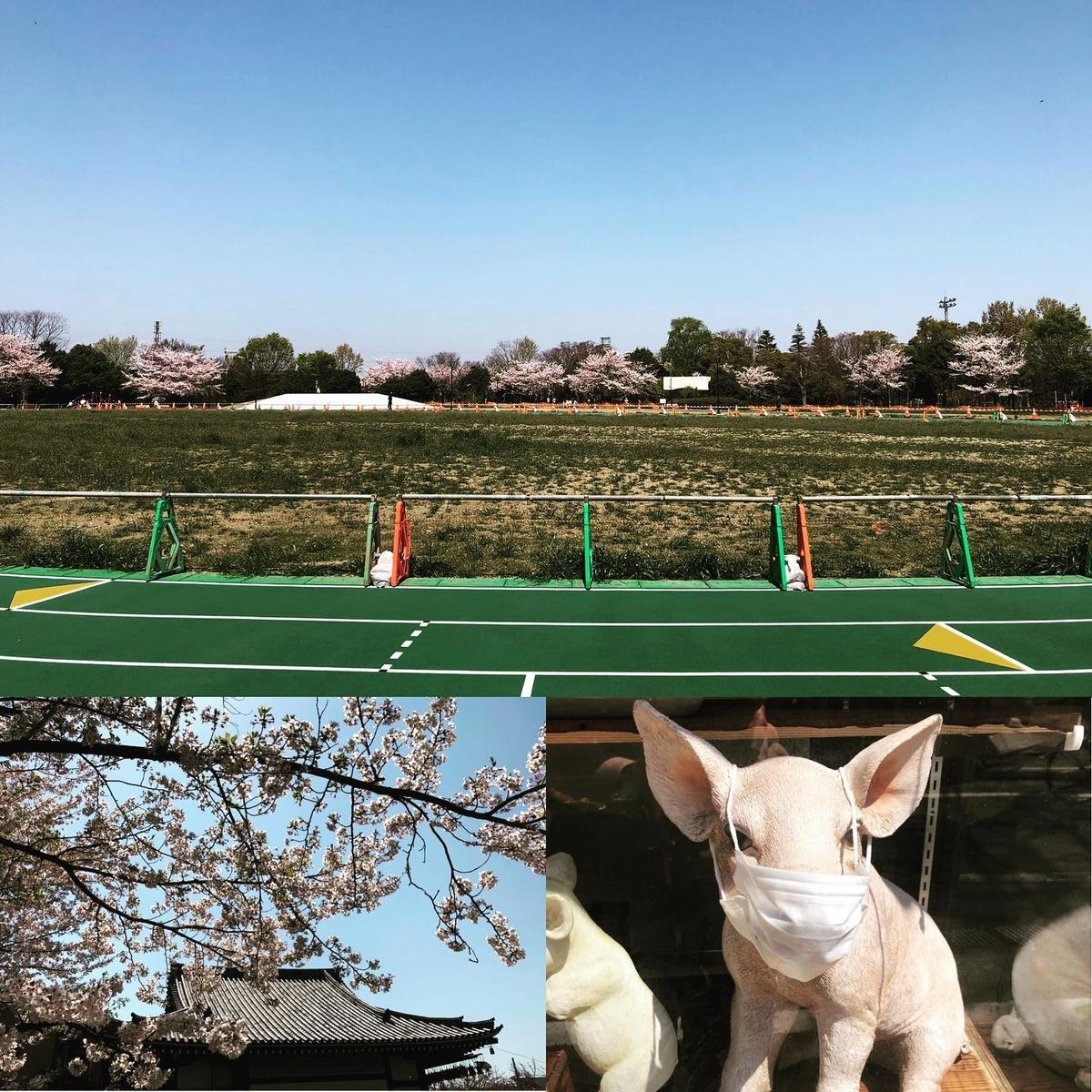 f:id:yasutaniwaki:20200405065121j:plain