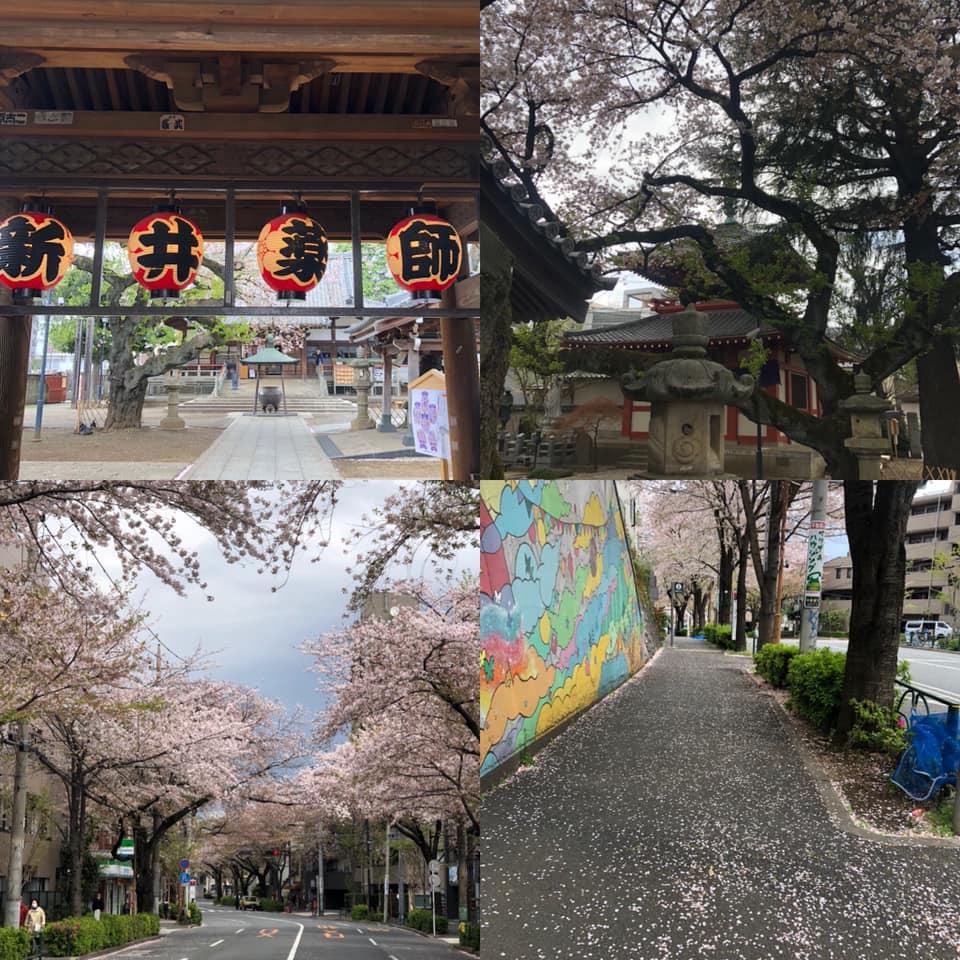 f:id:yasutaniwaki:20200406061304j:plain
