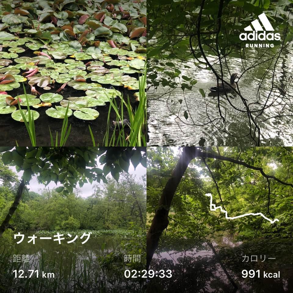 f:id:yasutaniwaki:20200523182603j:plain