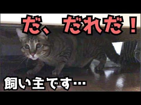 f:id:yatchae:20170616200013j:plain
