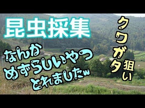 f:id:yatchae:20170729200019j:plain