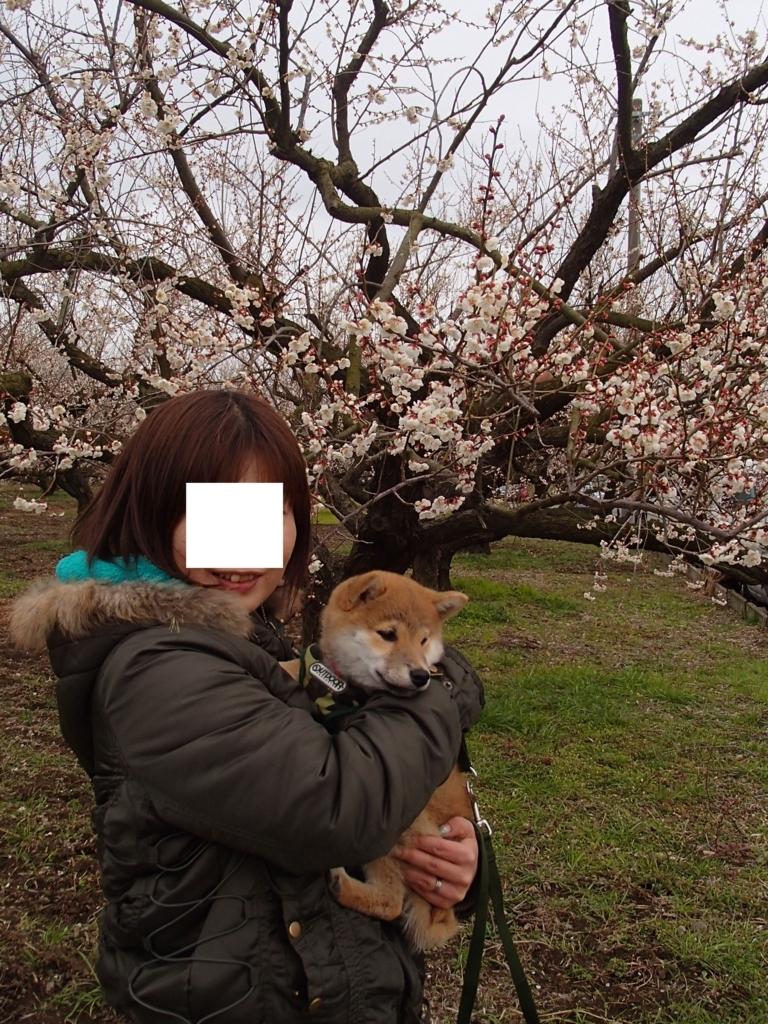 f:id:yatosyouta:20170717150058j:plain