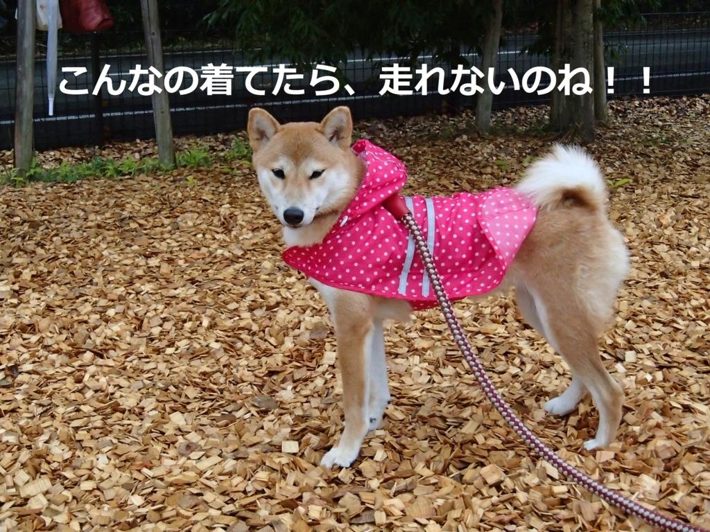 f:id:yatosyouta:20170806175539j:plain