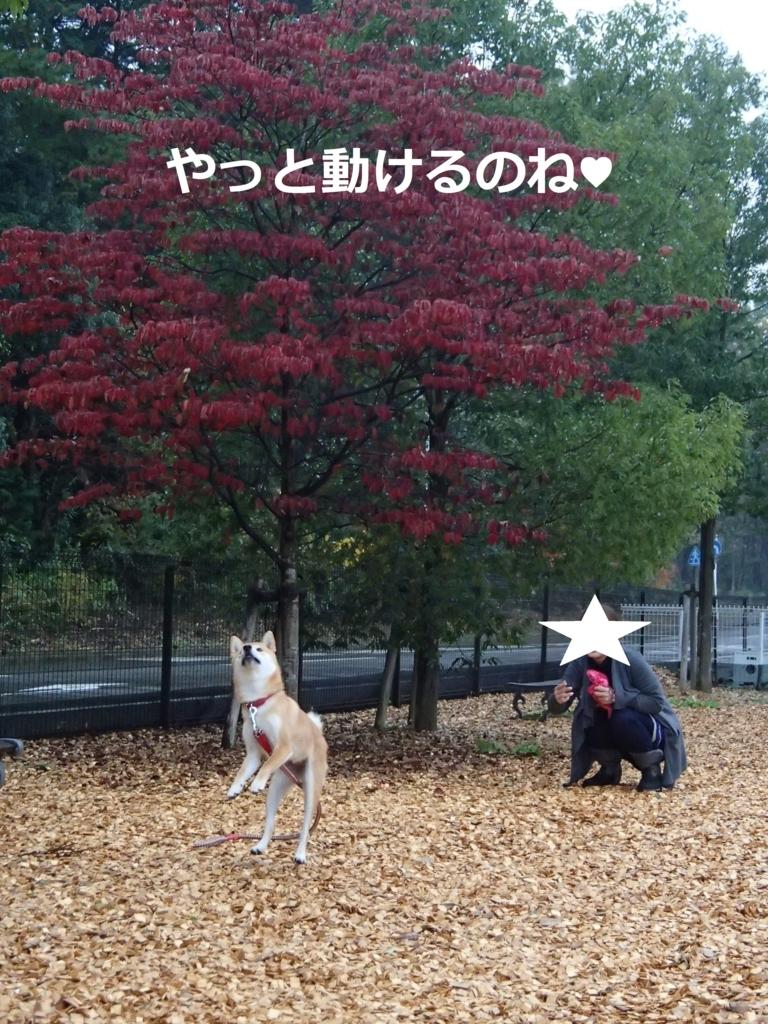 f:id:yatosyouta:20170806180651j:plain