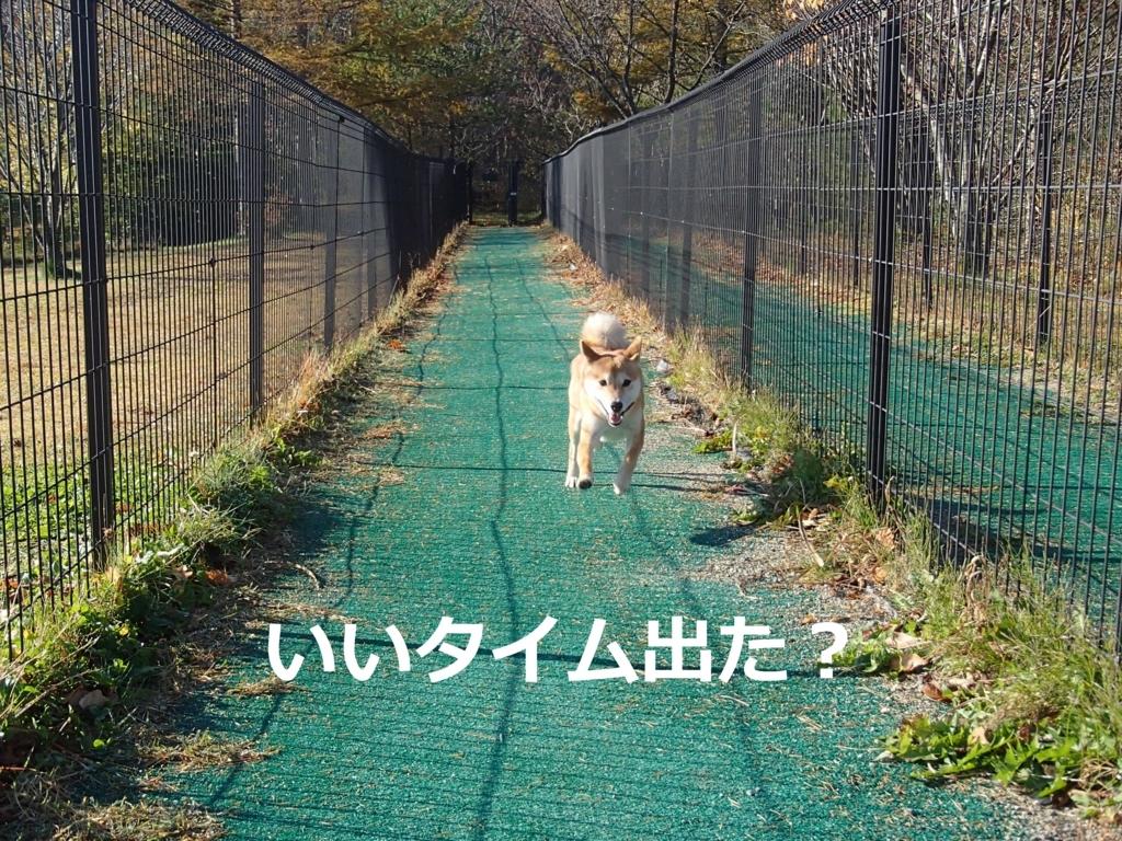 f:id:yatosyouta:20170807125913j:plain