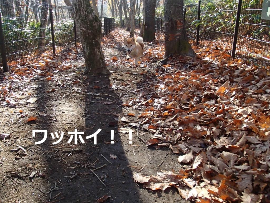 f:id:yatosyouta:20170807125951j:plain