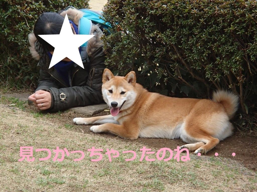 f:id:yatosyouta:20170809210334j:plain