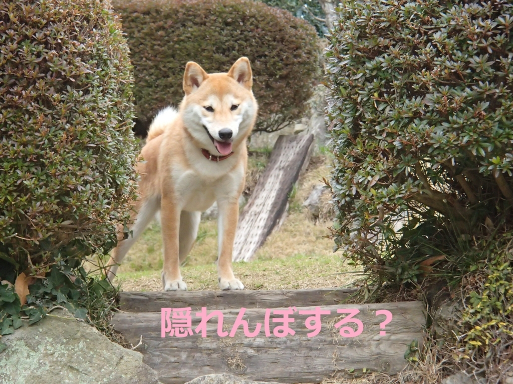 f:id:yatosyouta:20170809210418j:plain