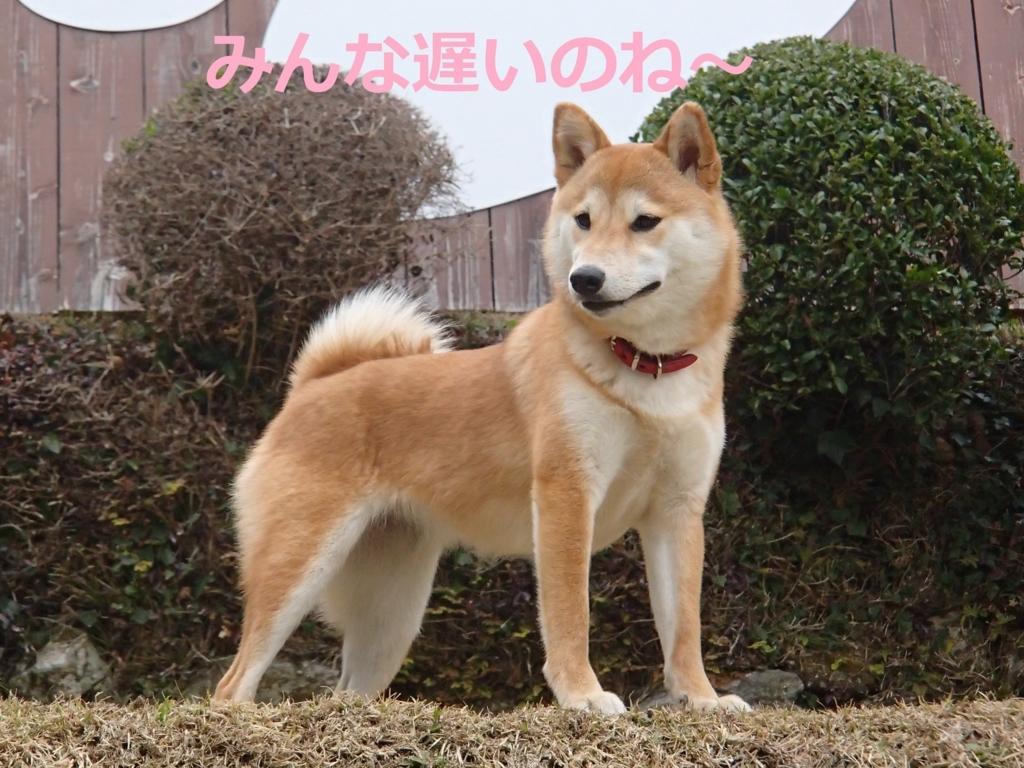 f:id:yatosyouta:20170809210422j:plain