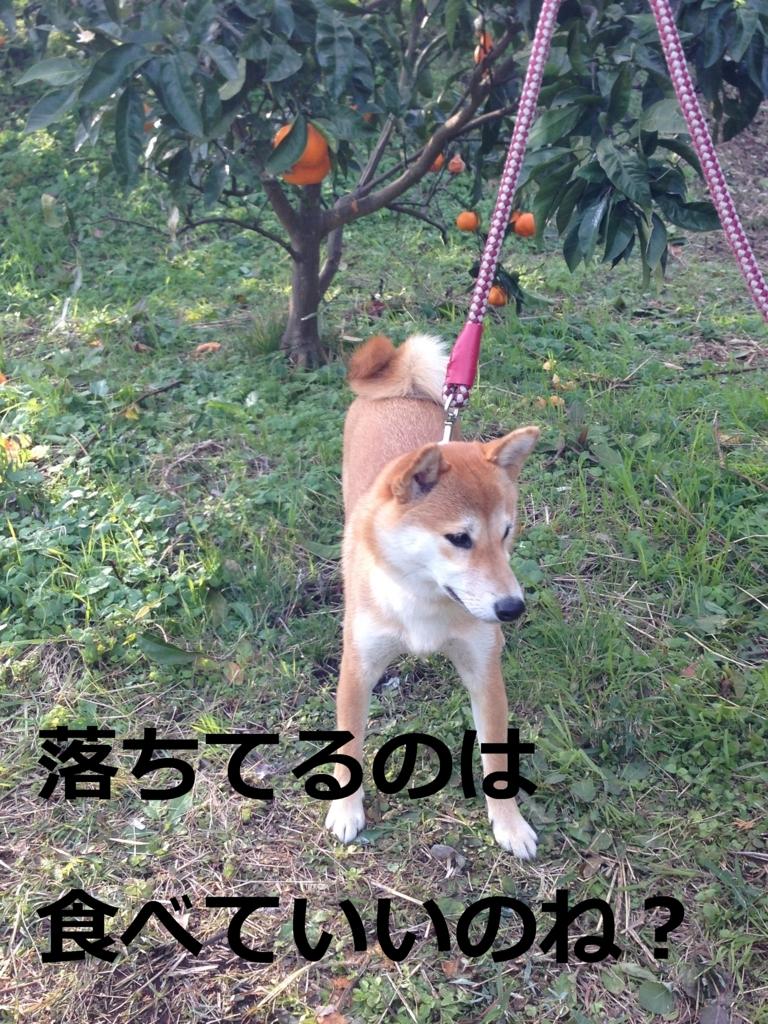 f:id:yatosyouta:20170811000923j:plain