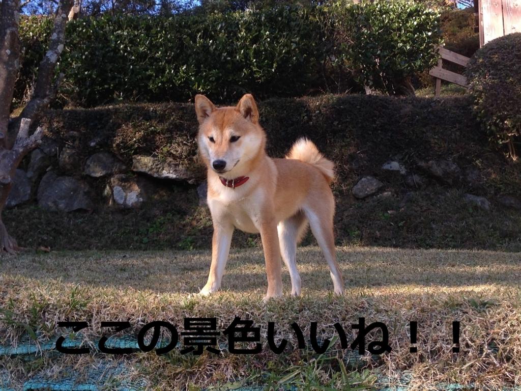 f:id:yatosyouta:20170811004318j:plain